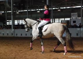Dressage Horse Stock 8 by lee-mare