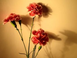 Carnations and Shadows by tracy-Me