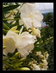 Oleander III by bluesoft82