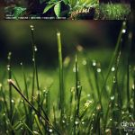 Dew Wallpaper Pack by Pat-S