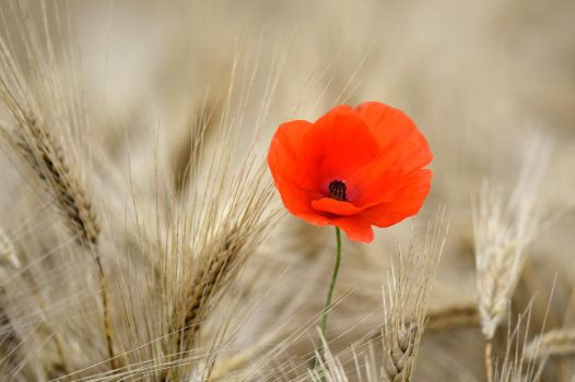 Lest we forget... by cricketumpire