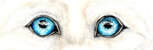 Beau's eyes by forensicfox