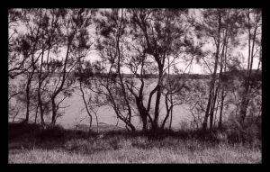 Screen of trees by addon