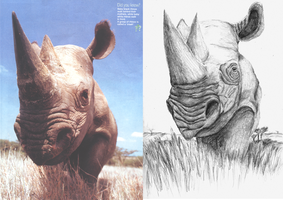 Rhino Drawing Reference by Jezzy-Fezzy