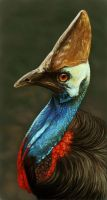 Cassowary by Deadsound