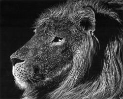 Lion Scratchboard by Andoledius