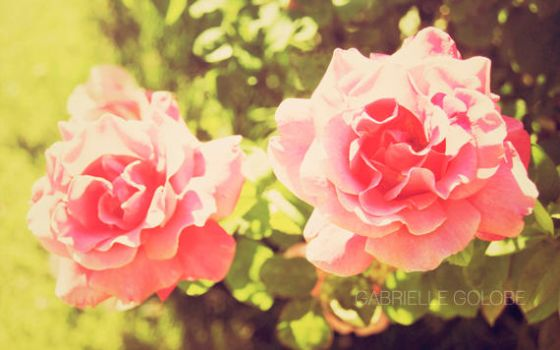 Little Roses by MsGabrielle