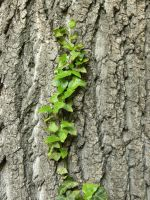Ivy line1 by Wicasa-stock