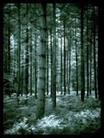 Forest Of Dean by she-sins