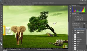 Nat Geo Wild by ANC4DES - The Power ( work area) by ANC4DES