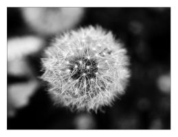 Make a Wish by pinica