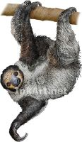 Linnaeus's Two Toed Sloth by rogerdhall