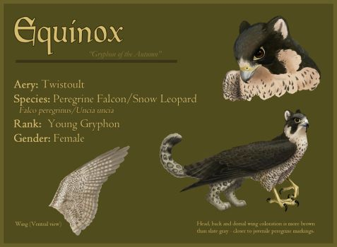 Equinox - Reference Sheet by windfalcon