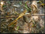 Dragonfly from Tashkent 1 by EldarZakirov