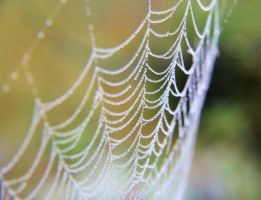 Web droplets by KariLiimatainen