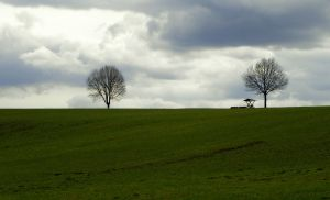 trees on green by Mittelfranke