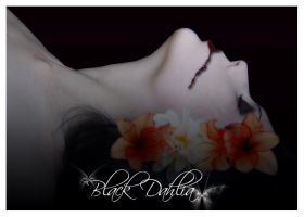 Black Dahlia by Sinfuljoy