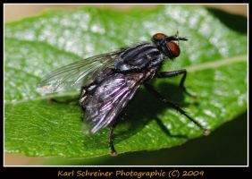 Fly 2 by KSPhotographic