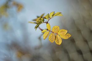 165 - Chequered leaves... by AnnaMagdalenaPe