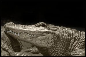 See you later alligator by Nameda