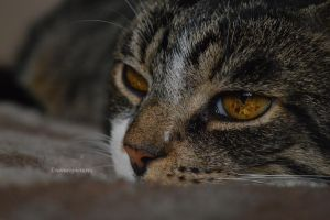 The cats profile by XnaturepicturesX
