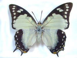 moths and butterflies stock 20 by hatestock