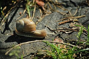 little snail in the morning by Lk-Photography