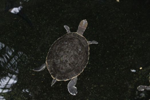 Turtle 1 by CastleGraphics