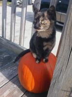 Pumpkin Kitty by MagickTouchBassist