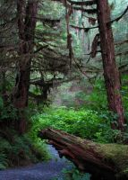 Temperate Rainforest by Phareodus