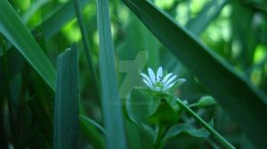 Tiny Flower, Huge Impact by st112570
