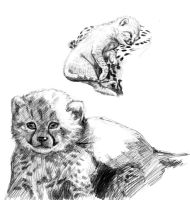 Assignment 1 Studies: Juvenile Cheetahs 2 by winterbourne