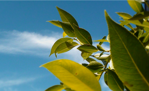 Leaves Under the Sky by talim556