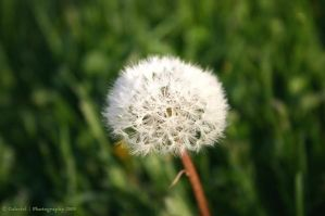too pretty to be a weed by Nariane