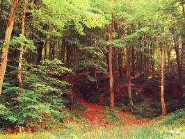 Forest by 2cool2care