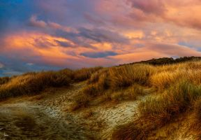 Beach Grass at Dusk by cokehead666
