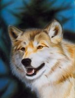 Wolf Portrait 2 by MGee-AD