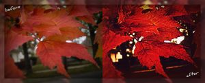 fall leaves before and after by mysteriousfantasy