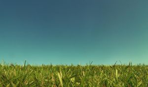 Grass and Sky by Dynnnad