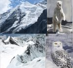 Some studies for 'Arctic Conflict' by Natalie-Becker