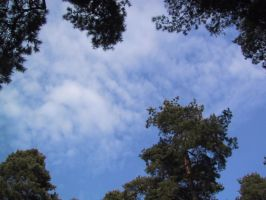 The Sky Through the Pines by Nemiflora