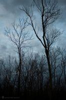 Cold Forest by gjkerkman