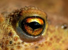 Toads eye by TheFunnySpider
