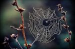 Dew On Spider Web After Yesterdays Thunderstorm   by eskile