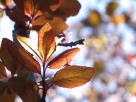 Plum tree leaves in March by junfender