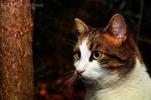 Staring cat by jay-gee-photographer