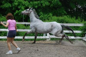 Appaloosa 34 by Spotstock