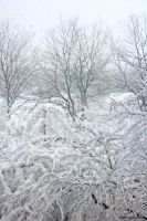 Chicago, First Snow 4 of 5 by LaDell