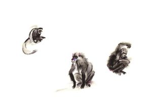 chimpazee and baboon by Titita