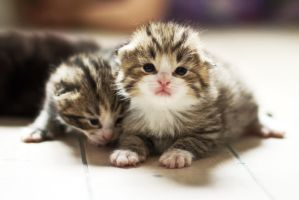 Tiny kitten I by attomanen